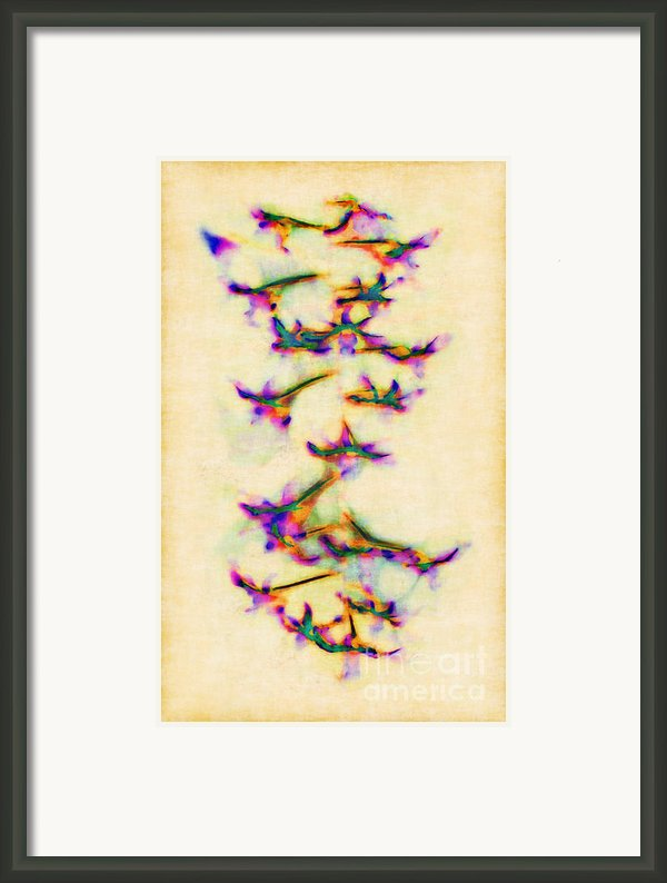 Orchids In Flight Framed Print By Judi Bagwell