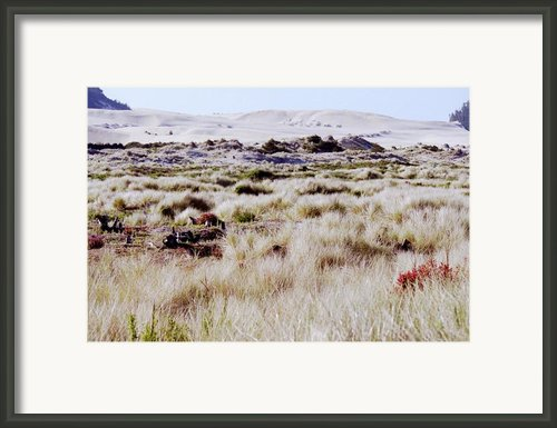 Oregon Dunes 6 Framed Print By Eike Kistenmacher