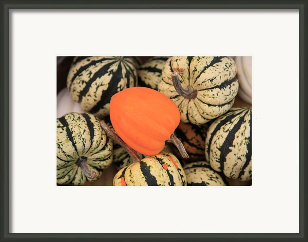 Organic Pumpkins Framed Print By Wendy Connett