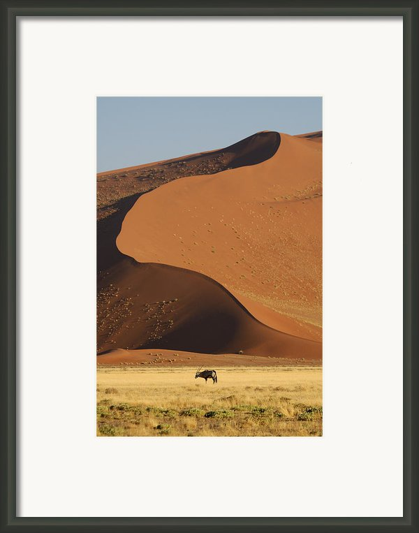 Oryx Ii Framed Print By Christian Heeb