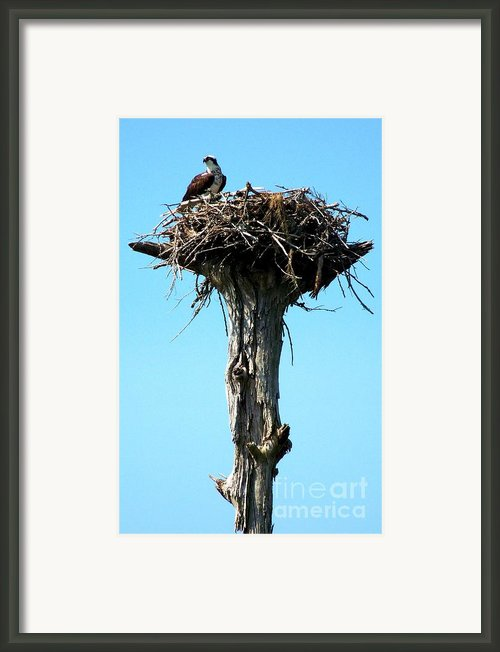 Osprey Point Framed Print By Karen Wiles
