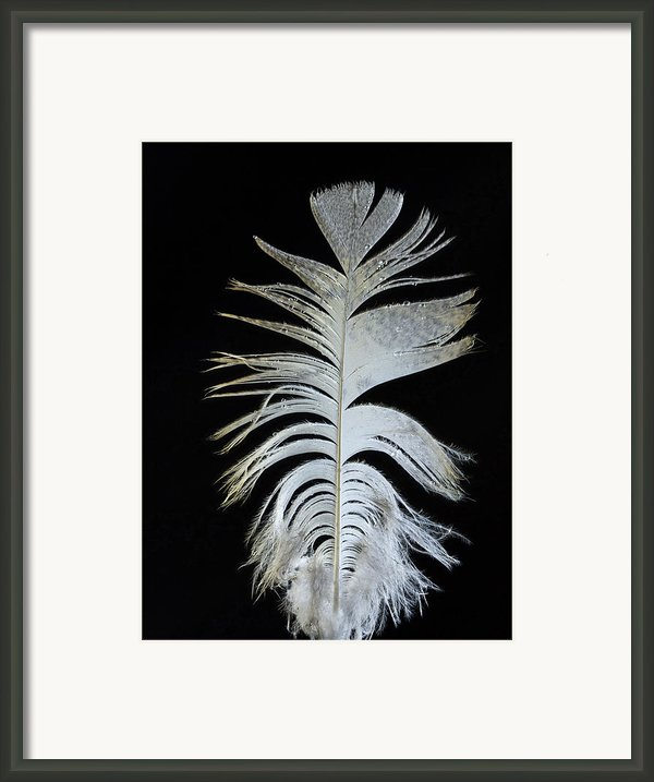 Owl Clothes Framed Print By Jean Noren