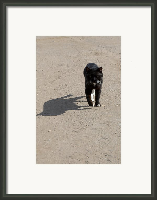 Owner Framed Print By Michael Goyberg