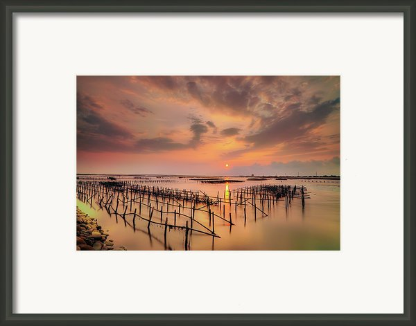 Oyster Racks Framed Print By Taiwan Nans0410