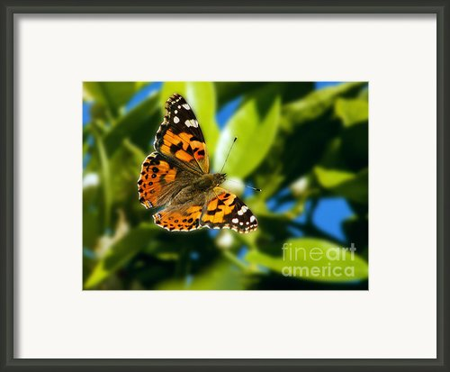 Painted Lady Framed Print By Robert Bales