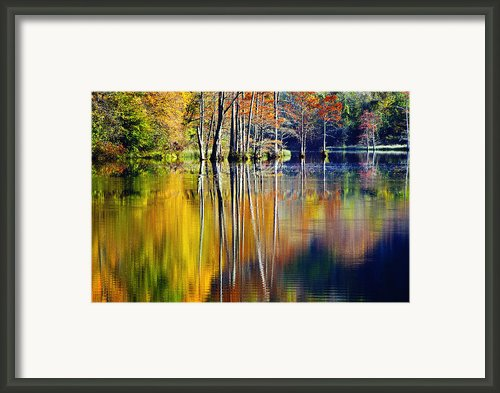 Painted Trees Framed Print By Tamyra Ayles
