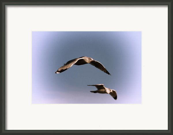 Pair Of Gulls Framed Print By Karol  Livote