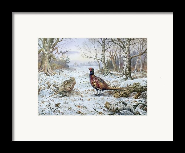 Pair Of Pheasants With A Wren Framed Print By Carl Donner