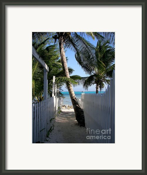 Palm Alley Framed Print By Karen Wiles