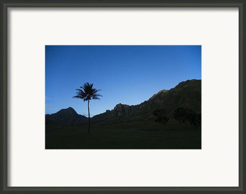 Palm And Blue Sky Framed Print By Dana Edmunds - Printscapes