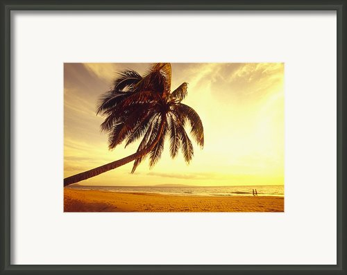 Palm Over The Beach Framed Print By Ron Dahlquist - Printscapes