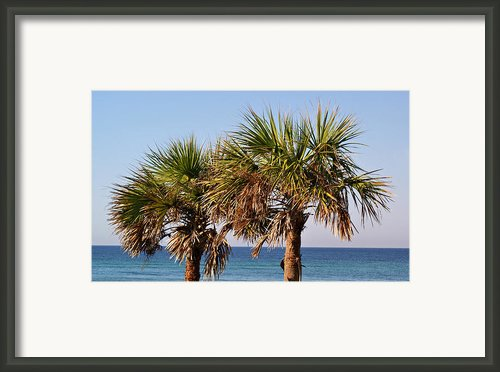 Palm Trees Framed Print By Sandy Keeton