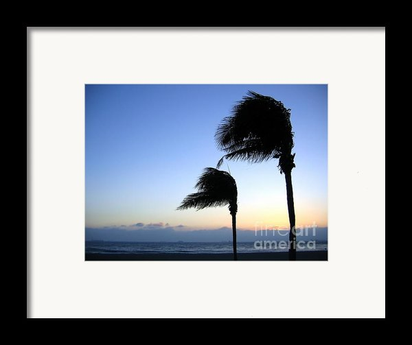 Palm Trees Swaying In The Wind Framed Print By Yali Shi