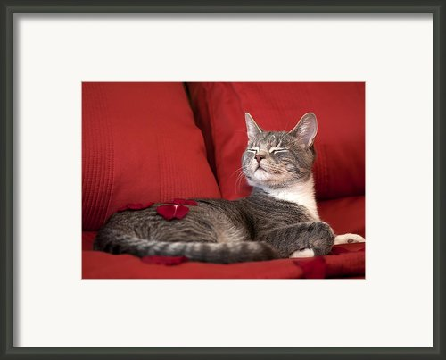Pampered Pet Framed Print By Mandy Wiltse