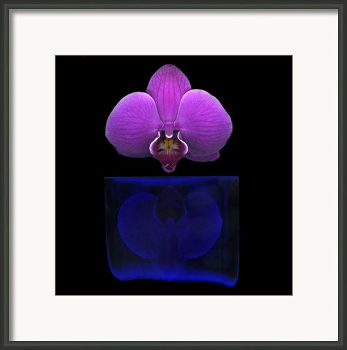 Papillon Framed Print By Christian Slanec