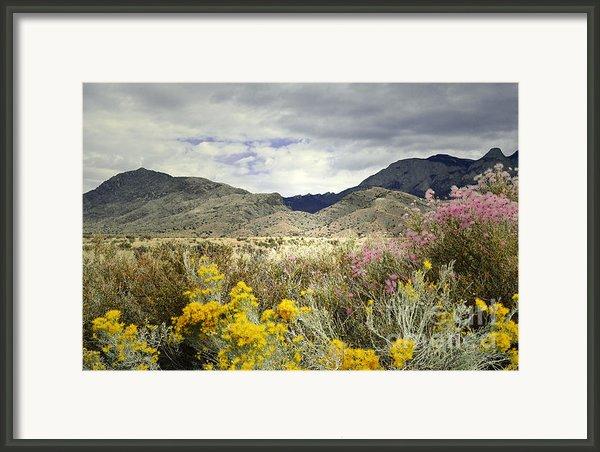 Paradise Mountain Framed Print By Andrea Hazel Ihlefeld