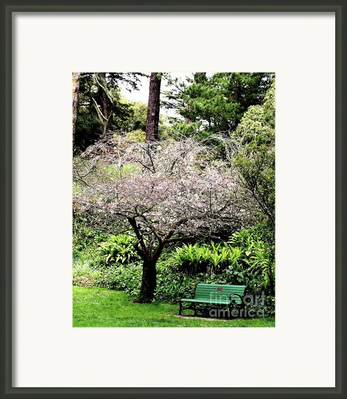 Park Bench At The Old Cherry Blossom Tree . 7d5804 Framed Print By Wingsdomain Art And Photography