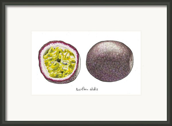 Passiflora Edulis Fruit Framed Print By Steve Asbell