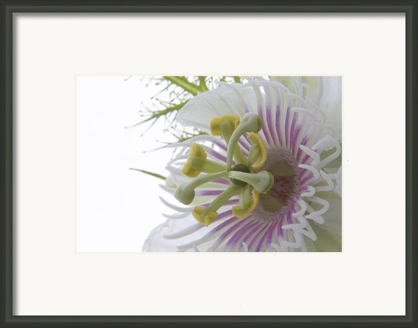 Passion Flower Framed Print By Andrea Lim