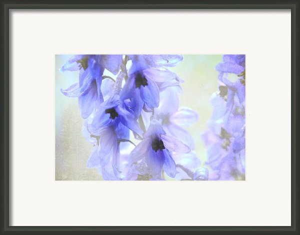 Passion For Flowers. Blue Dreams Framed Print By Jenny Rainbow