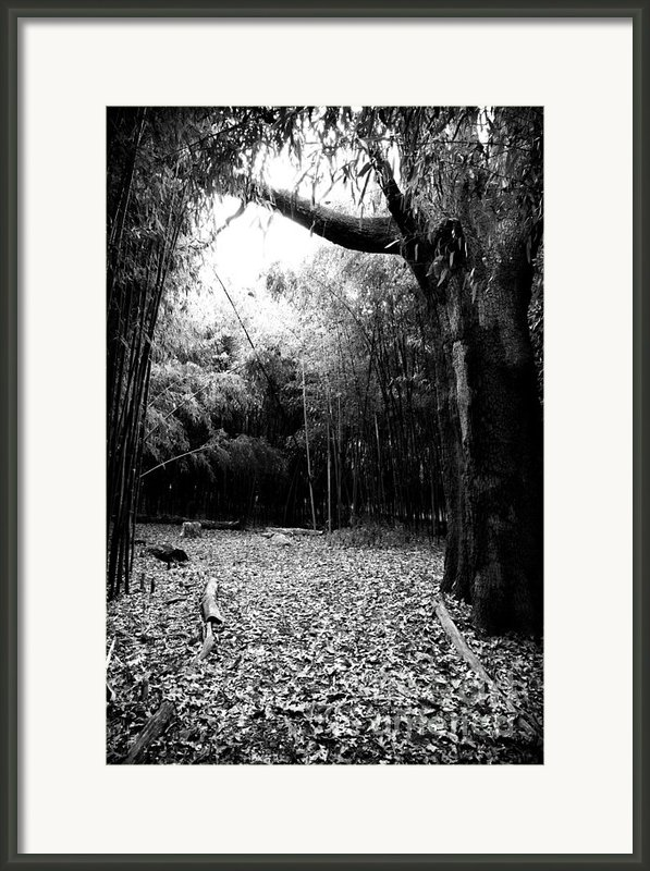 Patch Of Light Framed Print By John Rizzuto