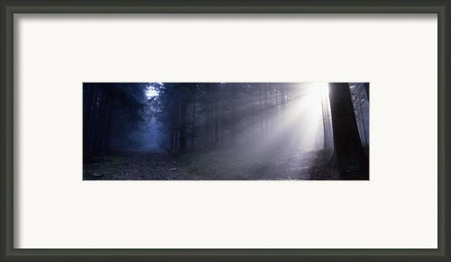 Path Through A Misty Forest Framed Print By Intensivelight