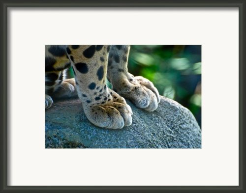 Paws For Effect Framed Print By Gene Sizemore