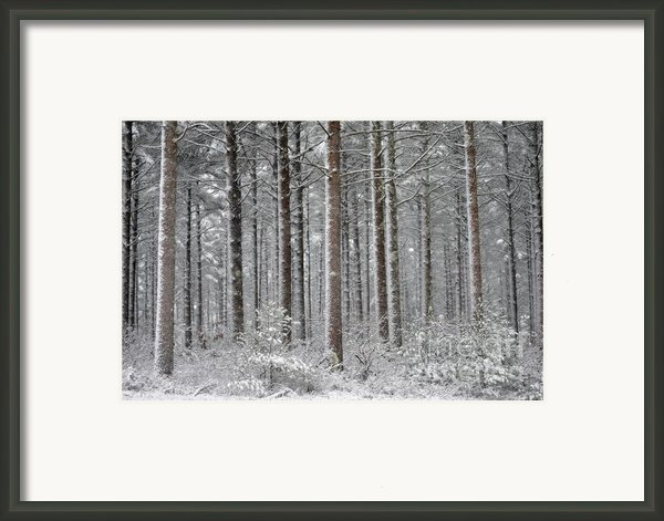 Peace In The Woods Framed Print By Catherine Reusch  Daley