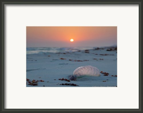 Peaceful Man Of War Framed Print By Charles Warren