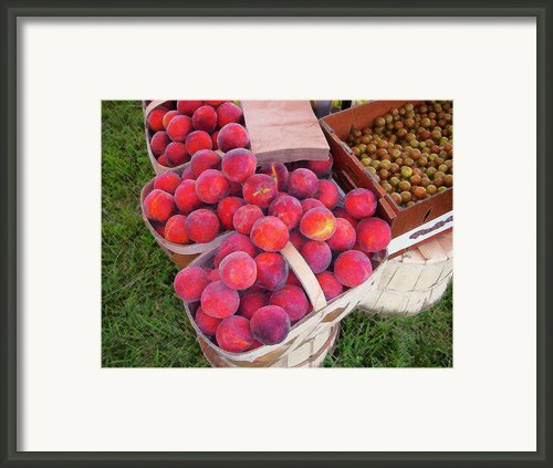 Peachy Keen Framed Print By Paul Mashburn