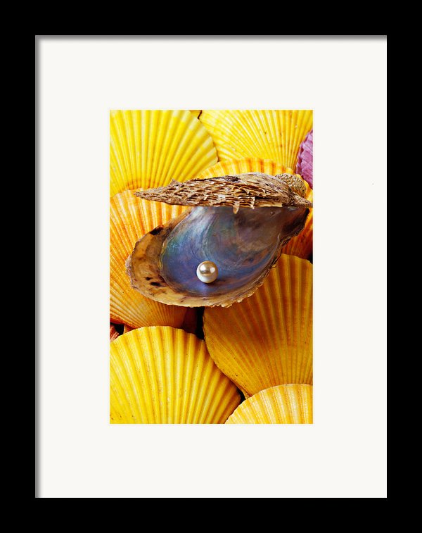 Pearl In Oyster Shell Framed Print By Garry Gay