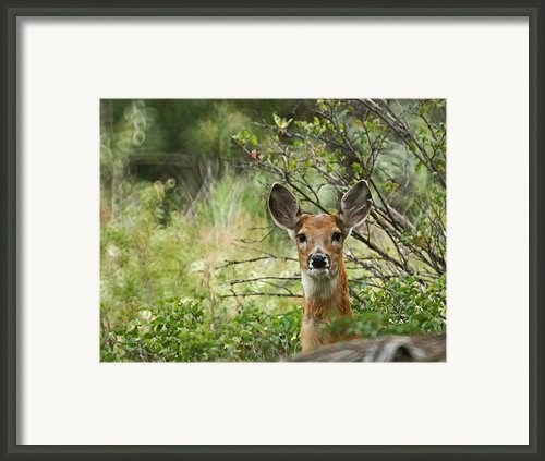 Peek A Boo Framed Print By Ernie Echols