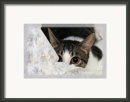Peek A Boo I See You Too Framed Print By Andee Photography