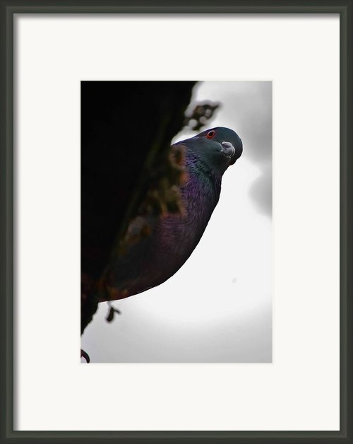 Peeking Pigeon Framed Print By Digiart Diaries By Vicky Browning