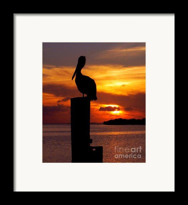 Pelican Sundown Framed Print By Karen Wiles