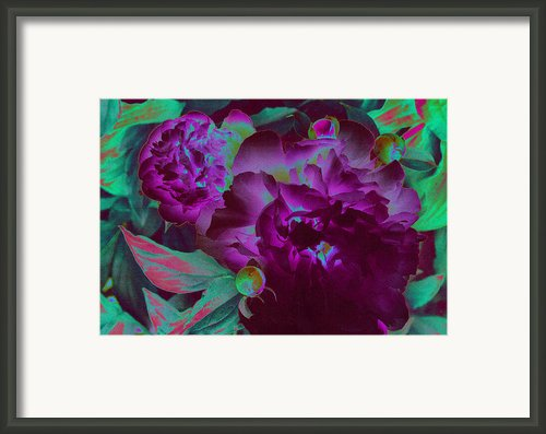 Peony Passion Framed Print By First Star Art