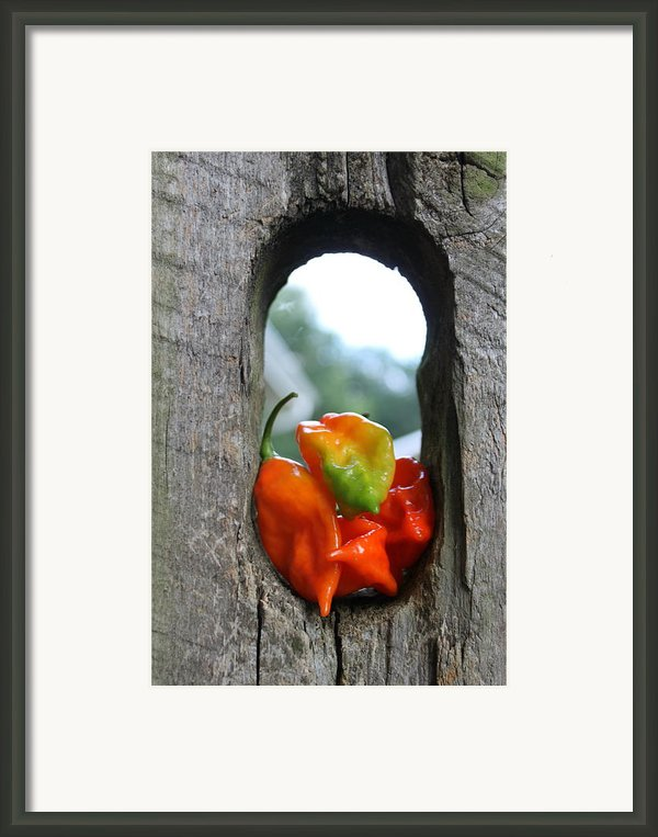 Peppered Fence Framed Print By Lauri Novak