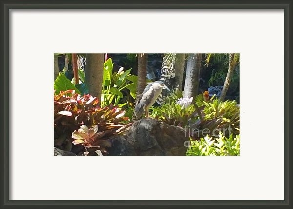 Perched Bird Framed Print By Silvie Kendall