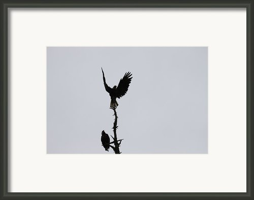 Perfect Landing Framed Print By Garry Otto