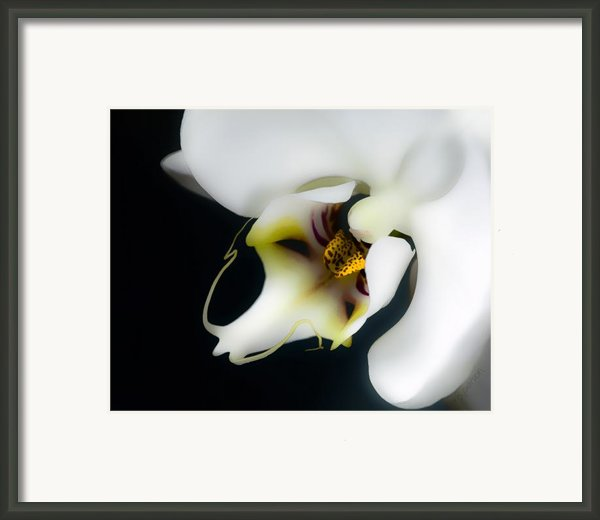 Perfection Framed Print By Barb Pearson