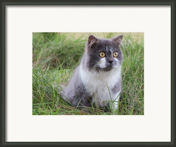 Persian Cat Sit In Green Yard Framed Print By Nawarat Namphon