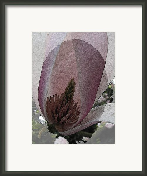 Petal Prose Framed Print By Tim Allen