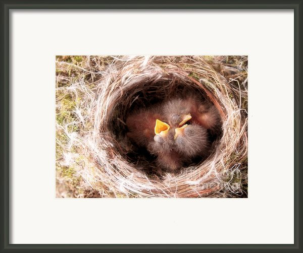 Phoebe Babies In Nest Framed Print By Angie Rea