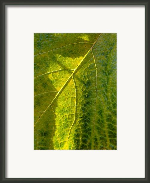 Photosynthesis In Progress Framed Print By Everett Bowers