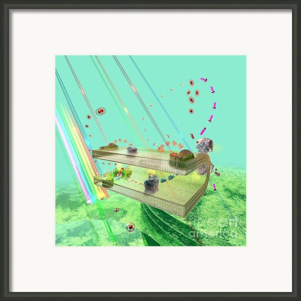 Photosynthesis Framed Print By Russell Kightley