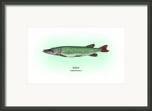 Pickerel Framed Print By Ralph Martens