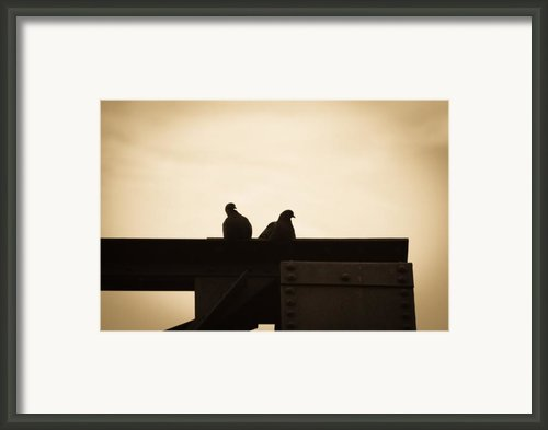 Pigeon And Steel Framed Print By Bob Orsillo