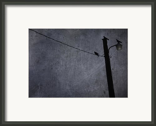 Pigeon Watch Framed Print By Larysa Luciw