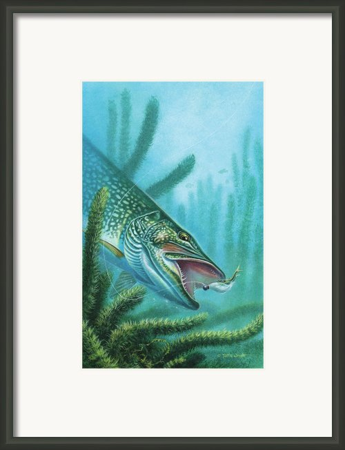 Pike And Jig Framed Print By Jq Licensing