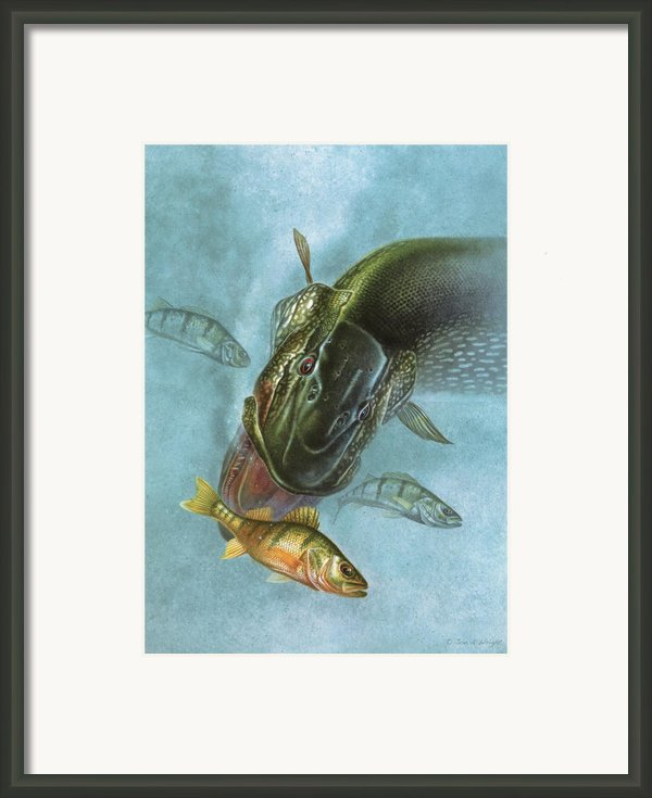 Pike And Perch Framed Print By Jq Licensing